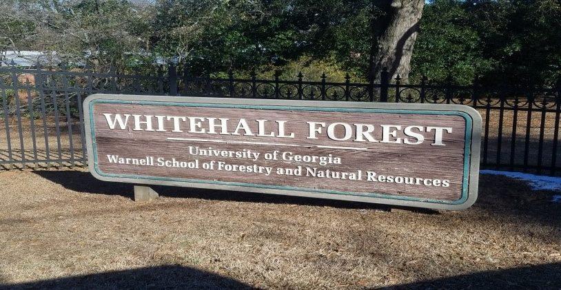 UGA Whitehall Forest