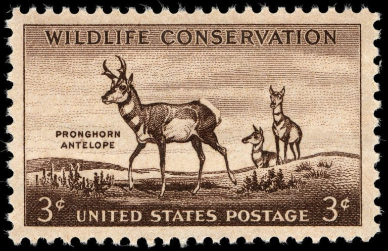 Conservation In America