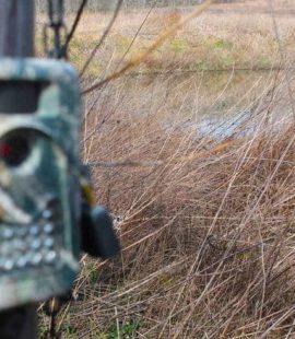 post season deer cams