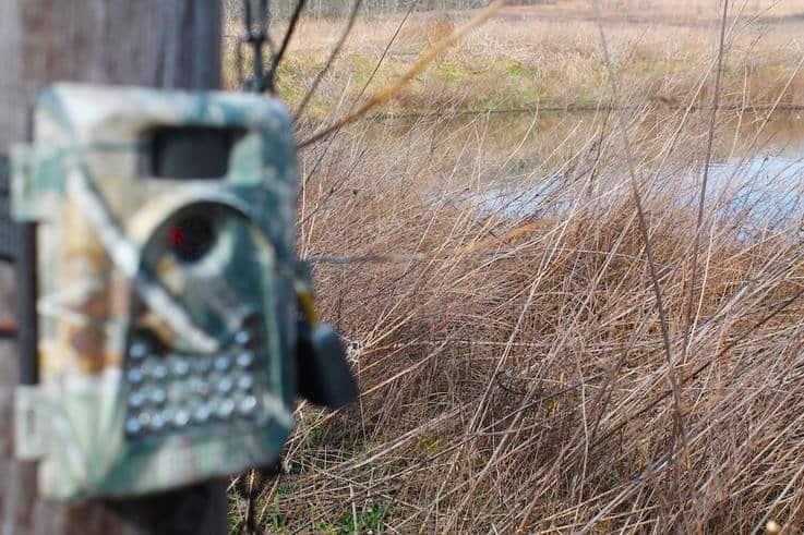 No Off Season – Trail Camera Survey
