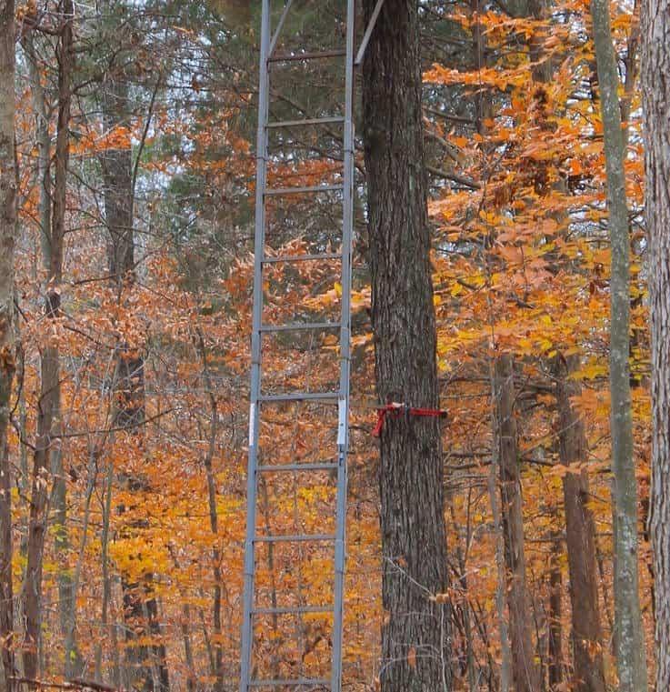 No Off Season – Tree Stand Maintenance